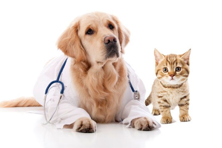 Whether you need cat insurance or pet insurance