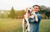 The Benefits of Supplements in Your Pet's Life