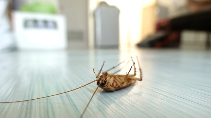How to Choose the Best Pest Control Service