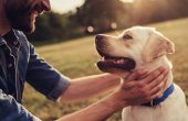 Going on a Vacation? 5 Tips to Keep Your Dog Happy and Safe When You're Away