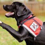 Do I Get a Service Dog
