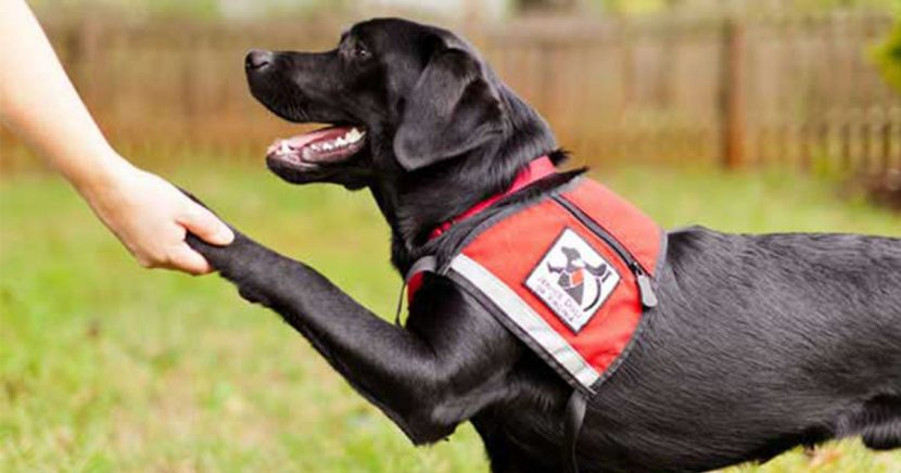 Do I Get a Service Dog?