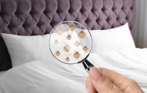 Four bed bug control methods used by professionals