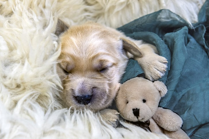 9 Things You Need to Buy for a New Puppy
