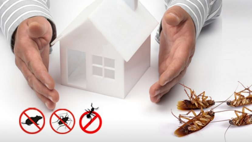 5 key things to know about pest control