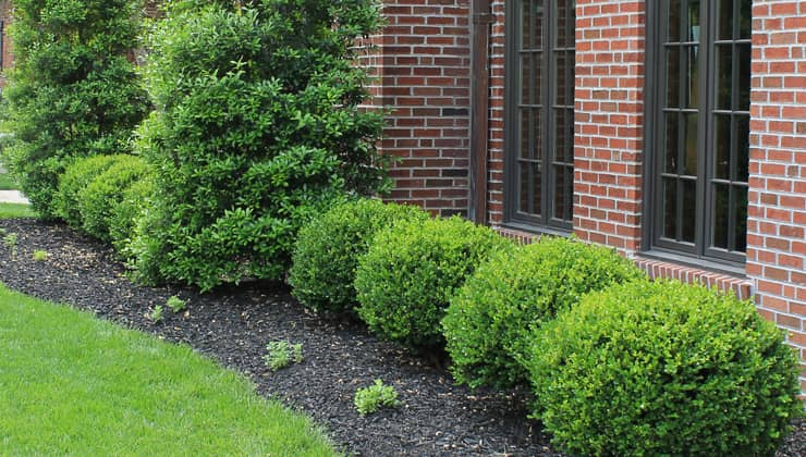 5 Tips for Maintaining Your Shrubs