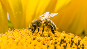 Royal Jelly Summing Up Its Uses And Benefits
