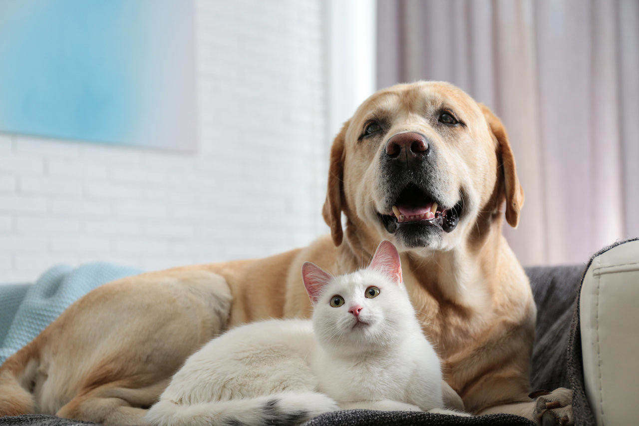 Pets: Caring for Our Furry Little Companions