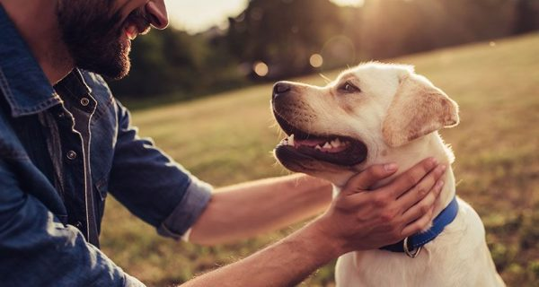 Keep Your Pets Healthy and Happy