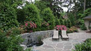 Plants to Increase Privacy in the Yard