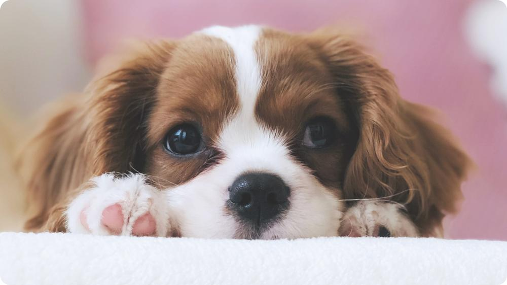 Helpful Tips in Removing Pet Stains and Odor from Your Carpets At Home