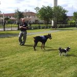 mobile pet grooming coral gables