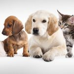 Best Site to Shop for Your Pet