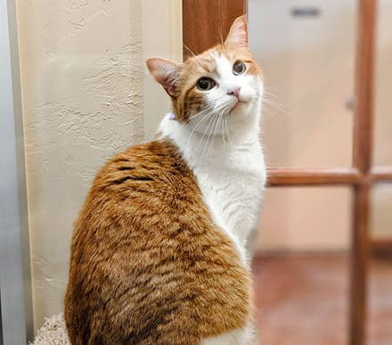 What are the important features which should be in a cat boarding