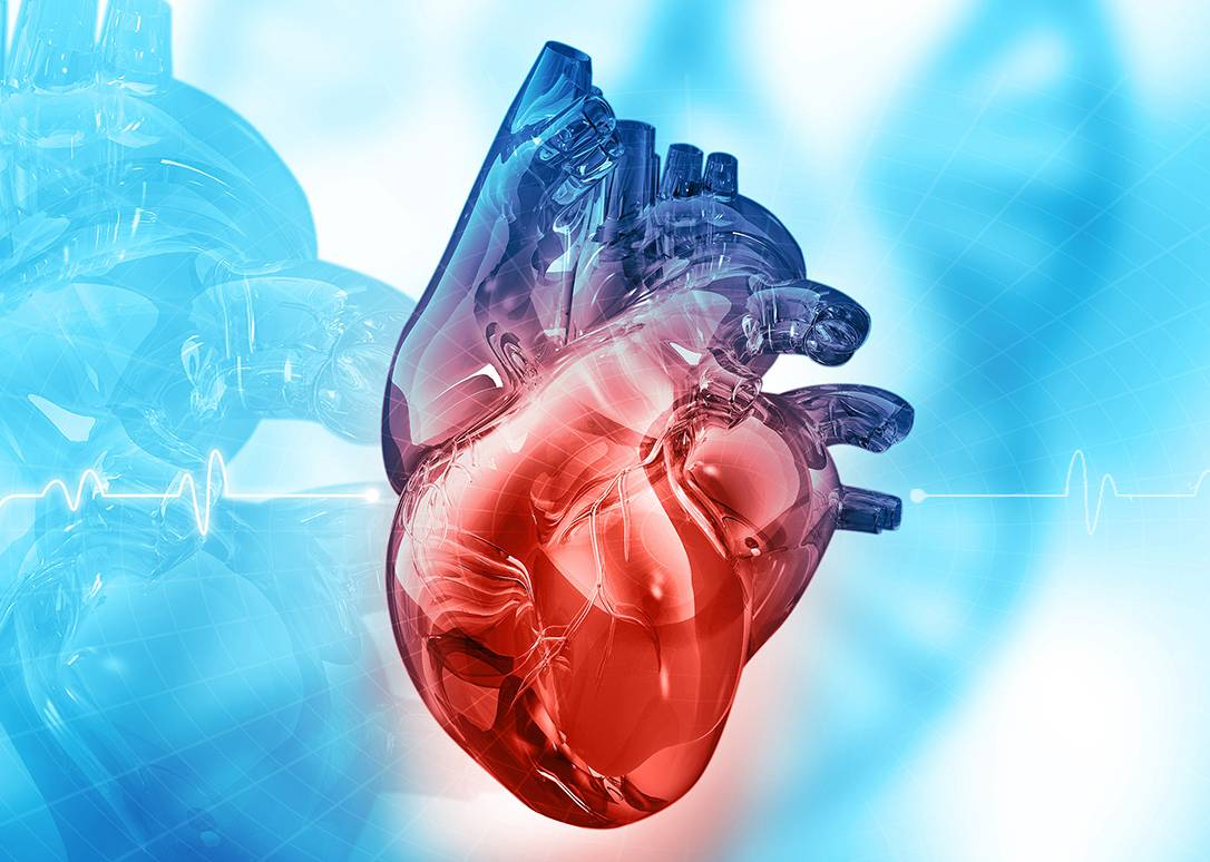 The Most Common Cardiovascular Diseases